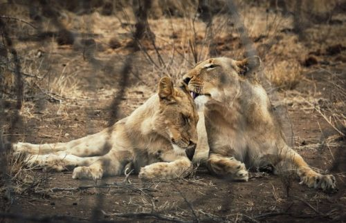Mom Son Grooming at Wildebeest Dam by Dan B33