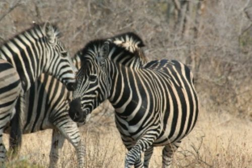 Multitude of stripes by Richard Brune