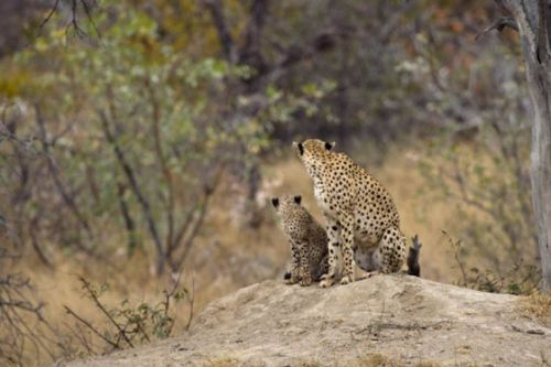 Mum and cub by Manuel Lopes