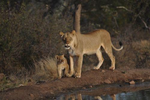 Mum and her single cub at Kudu pan by Francois Barnard