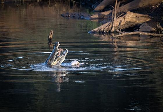 Ndlovu Dam croc by Dan B33