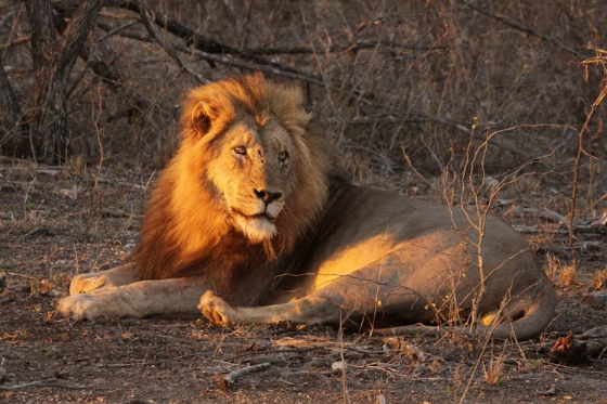 North lion by Graham B2 (2)