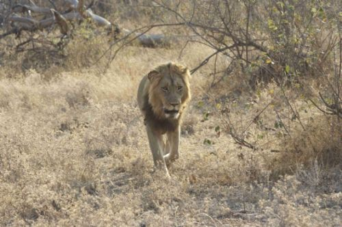 Our big boy Kuifkop by Chelsea Stroobach