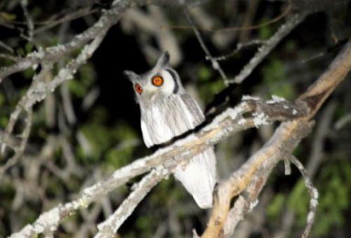Owl by Alec Ryall 2