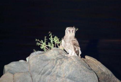 Owl by Alec Ryall