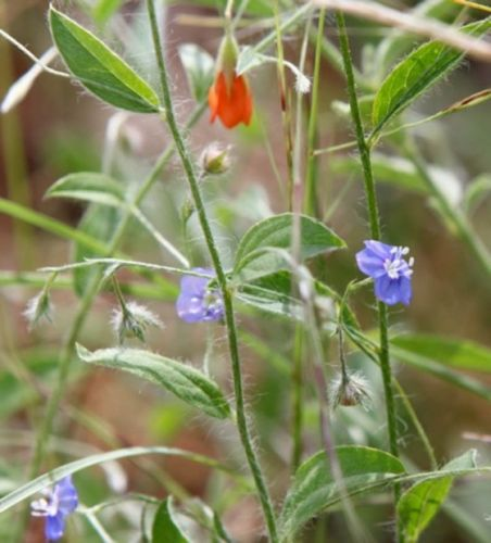 Pretty bush flowers by Wendy Leppard