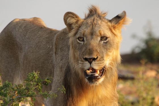 Pride at Wildebeest Dam 2 by Graham B2