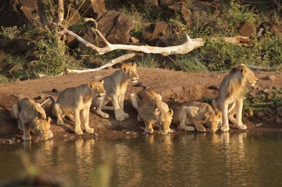 Pride at Wildebeest dam by Graham B2