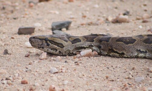 Python by Kate B8