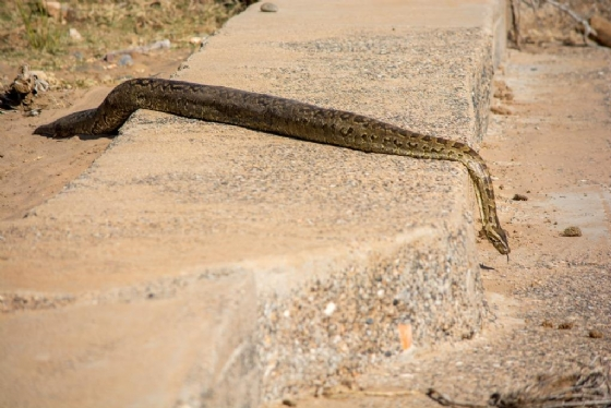 Python on Causeway by B36