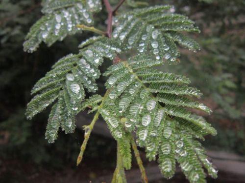 Rain drops by Anita Riley-Hawkins