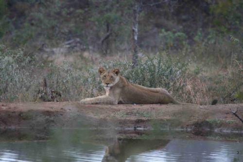 Reflection in Kudu pan by Kenny Jones
