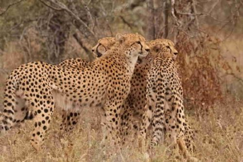 Spots by Graham Benfield
