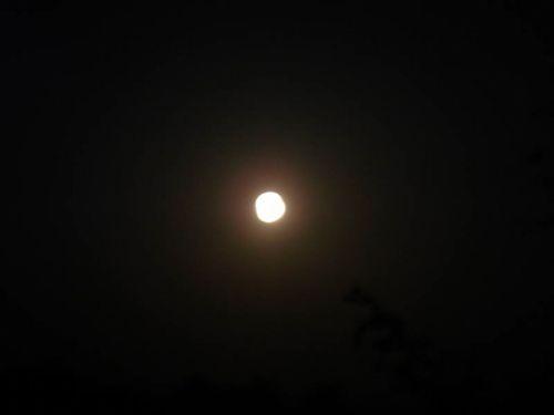 Spring moon by Daniel 2