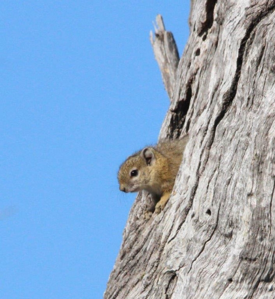 Squirrel peekaboo by TY A8