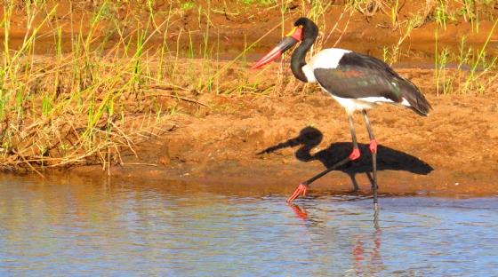 Stork by JocK B32