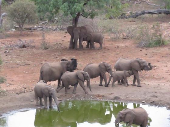 Suckling elephant at Kudu Pan by Jane A3