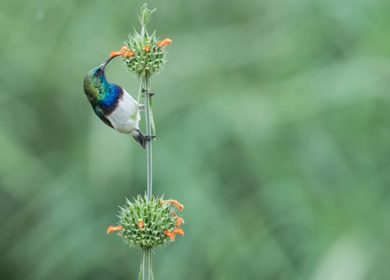 Sunbird at The Pools 2 by JF B35