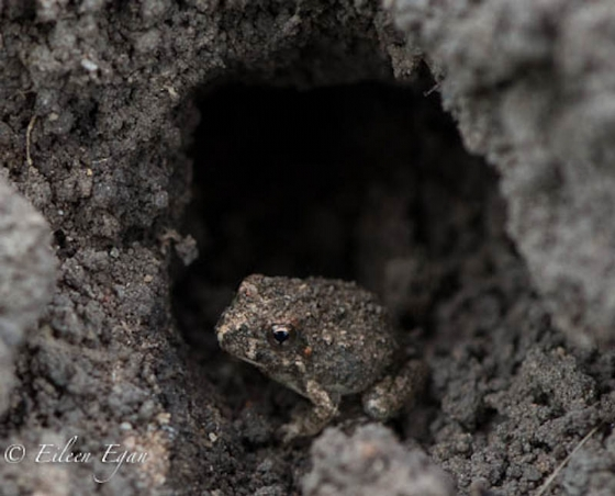 Tiny tiny frog by Eileen Egan
