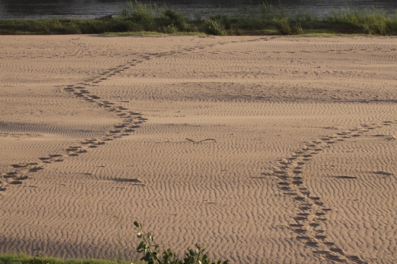 Tracks over ripple marks by Graham B2