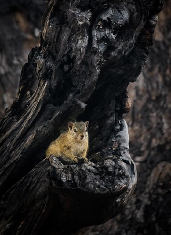 Tree squirel enjoying his porch by Dan B33