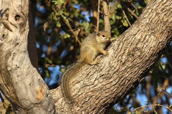 Tree squirrel by Simon Leppard