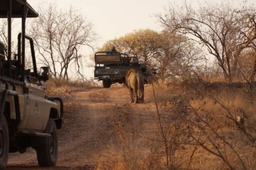 Typical ONGR traffic by Graham Benfield