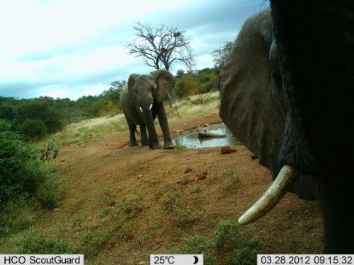 Up Close at Kudu Pan