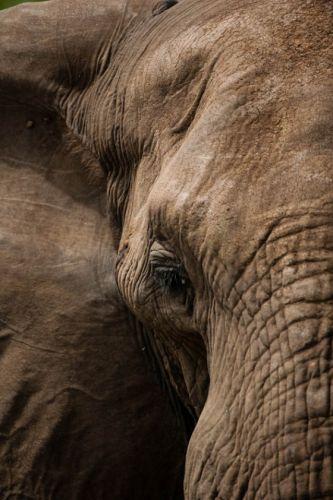 Very close elephant by Carl Hattingh