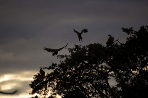 Vulture silhouettes by Jason Truscott