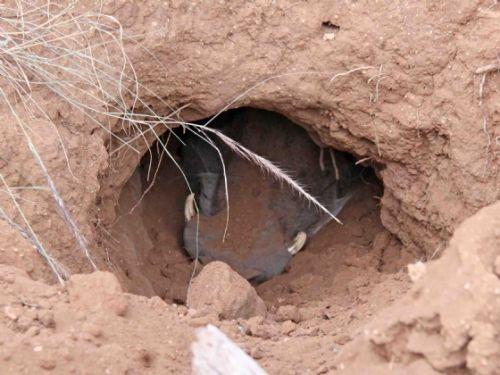 Warthog Hole by Nic Holzer