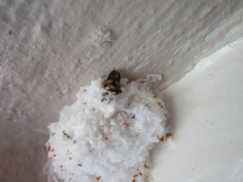 Wasp burrowing into nest by Anita
