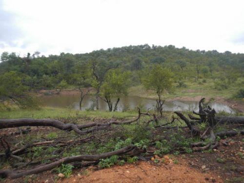 Wildebeest dam after the heavy rains