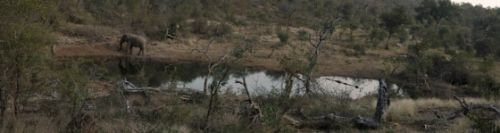 Wildebeest dam by Jurgen Elbertse