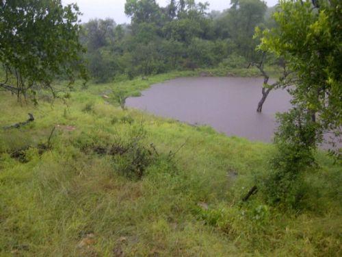 Wildebeeste Dam