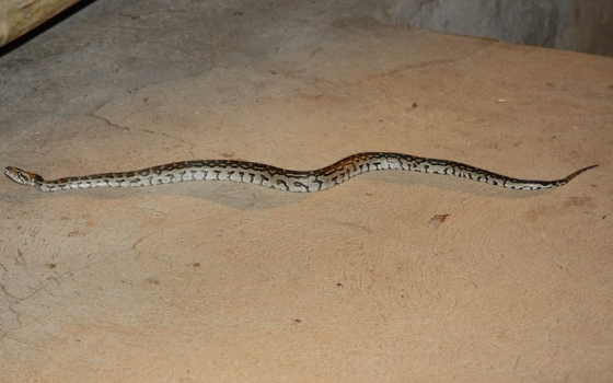 Young python in car port at unit B1 by Chelsea Stroobach