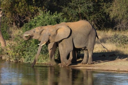 Youngsters at Sable dam by Simon Leppard