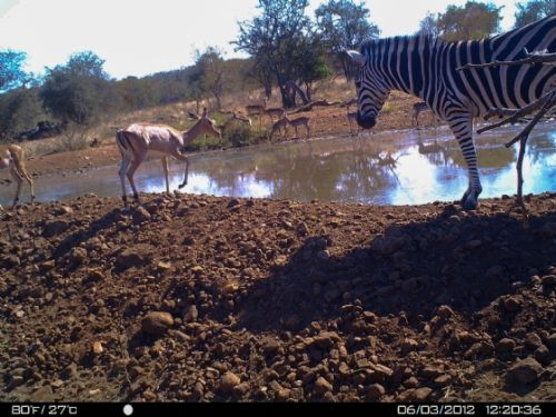Zeb and impala at Kudu pan