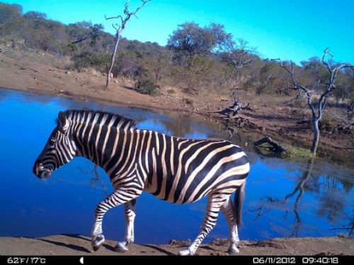 Zebra at Wildebeeste dam