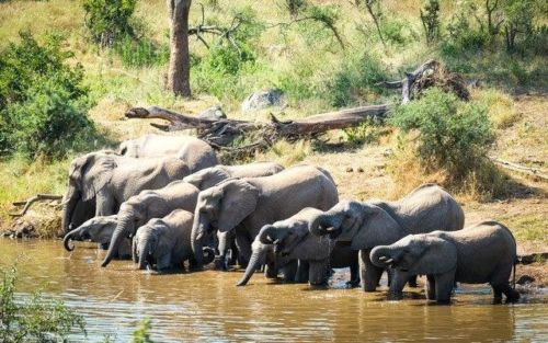 Breeding Herd at Ndlovu by Dan B33